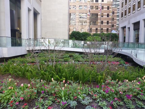 POPO garden