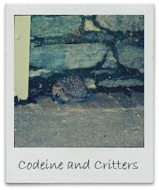 codeine and critters