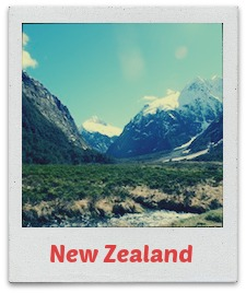 nz labeled polaroid